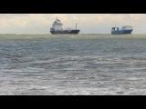 Черное море, шторм, дельфины, чайки.